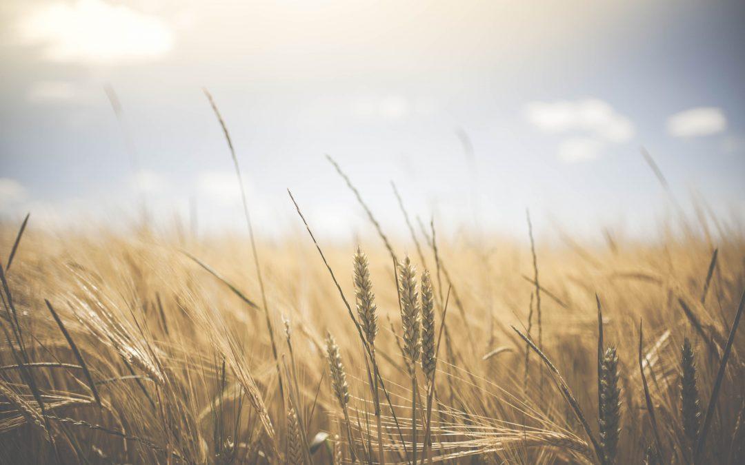 A nagy esőzés után is nélkülözhetetlen – baktériumtrágya az egészséges talajélet helyreállításáért