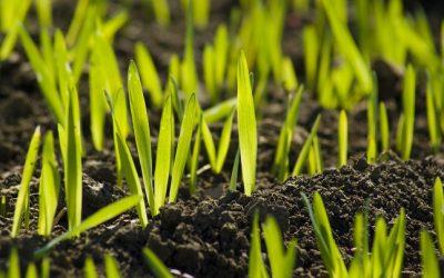 Oltsunk, hogy segítsünk! – A növénynek mindenképp