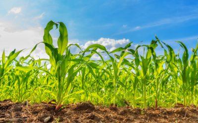 A jó talajélet aranyat ér!  A baktériumtrágyák használatának szükségessége és jelentősége