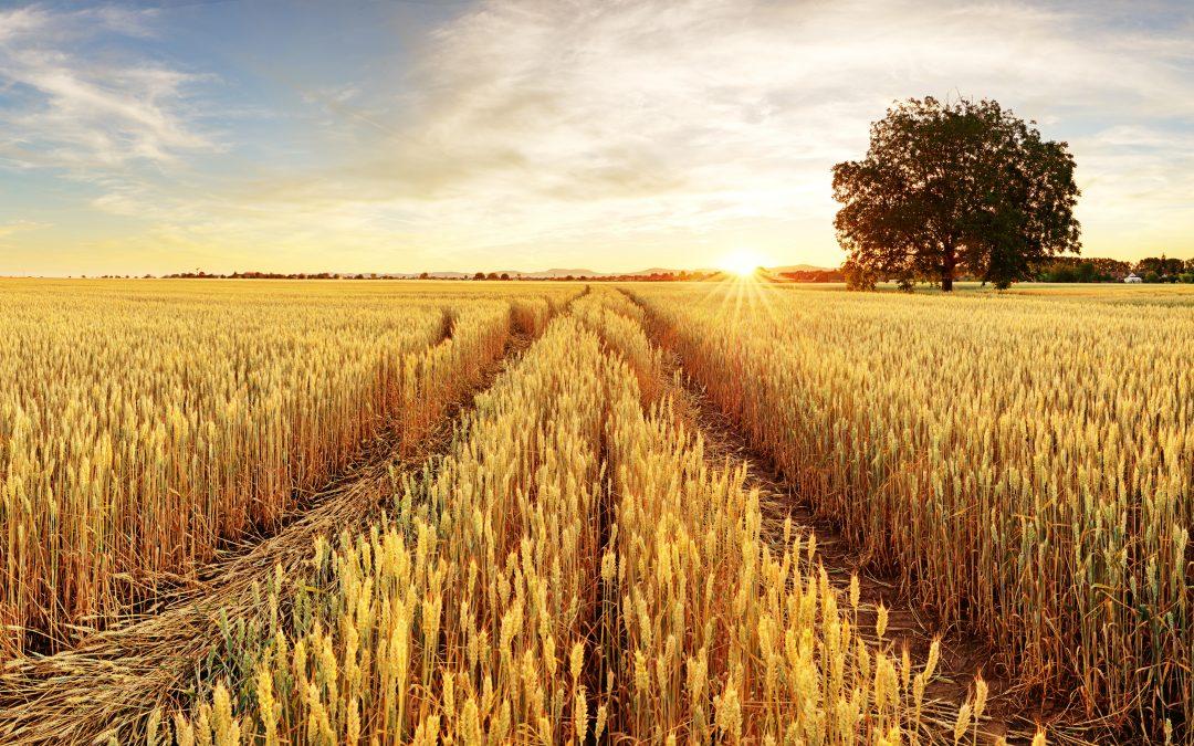 Több száz kilogrammos termésnövekedés baktériumtrágya használatával