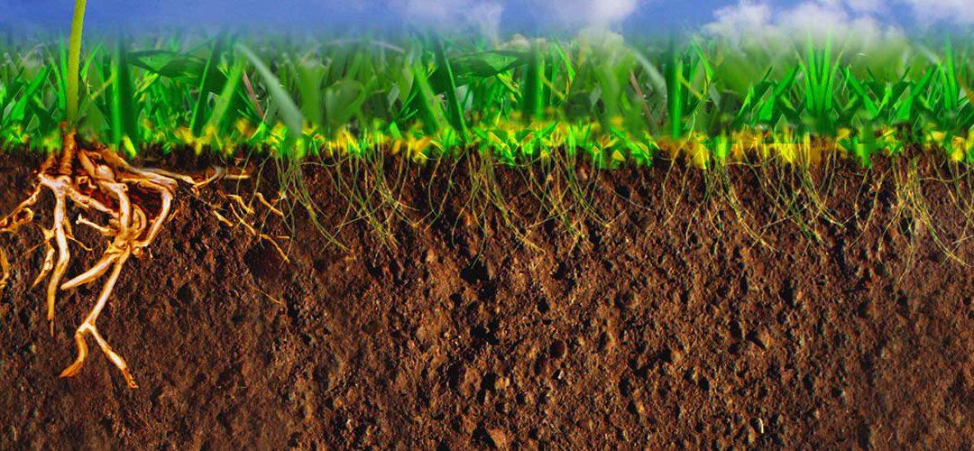 A sikeres növénytermesztés alapja a TALAJ!